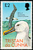 Atlantic Yellow-nosed Albatross Thalassarche chlororhynchos  1977 Birds