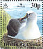 Atlantic Yellow-nosed Albatross Thalassarche chlororhynchos  2003 BirdLife International Sheet, no white frame