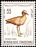Cream-colored Courser Cursorius cursor