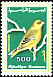 European Greenfinch Chloris chloris