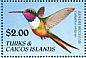 Bahama Woodstar Calliphlox evelynae  1990 Birds