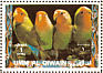 Rosy-faced Lovebird Agapornis roseicollis  1972 Birds