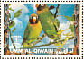 Black-cheeked Lovebird Agapornis nigrigenis  1972 Birds
