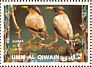 Brahminy Starling Sturnia pagodarum  1972 Birds
