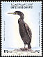 Socotra Cormorant Phalacrocorax nigrogularis  1995 Birds
