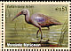 Hadada Ibis Bostrychia hagedash  2003 Endangered species
