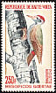 African Grey Woodpecker Dendropicos goertae  1964 Definitives