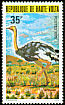 Common Ostrich Struthio camelus  1979 Protected birds