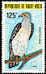 Cassin's Hawk-Eagle Aquila africana  1979 Protected birds