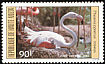 Greater Flamingo Phoenicopterus roseus  1984 Birds