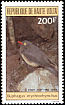 Red-billed Oxpecker Buphagus erythrorynchus  1984 Birds