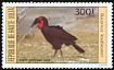 Southern Ground Hornbill Bucorvus leadbeateri  1984 Birds