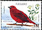Red Tanager Piranga flava