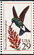 Broad-billed Hummingbird Cynanthus latirostris  1992 Hummingbirds