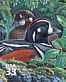 Harlequin Duck Histrionicus histrionicus  2000 Pacific coast rain forest 10v sheet, sa