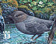 American Dipper Cinclus mexicanus  2000 Pacific coast rain forest 10v sheet, sa