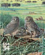 Burrowing Owl Athene cunicularia  2001 Great Plains prairie 10v sheet, sa