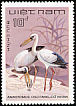 Asian Openbill Anastomus oscitans  1983 Birds