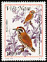 Speckled Piculet Picumnus innominatus  1999 Woodpeckers