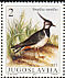Northern Lapwing Vanellus vanellus  1991 Protected birds Strip