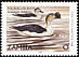 Knob-billed Duck Sarkidiornis melanotos  2001 Definitives