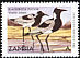 Blacksmith Lapwing Vanellus armatus  2001 Definitives