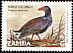 African Swamphen Porphyrio madagascariensis  2001 Definitives