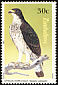 African Hawk-Eagle Aquila spilogaster  1984 Birds of prey