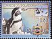 Galapagos Penguin Spheniscus mendiculus